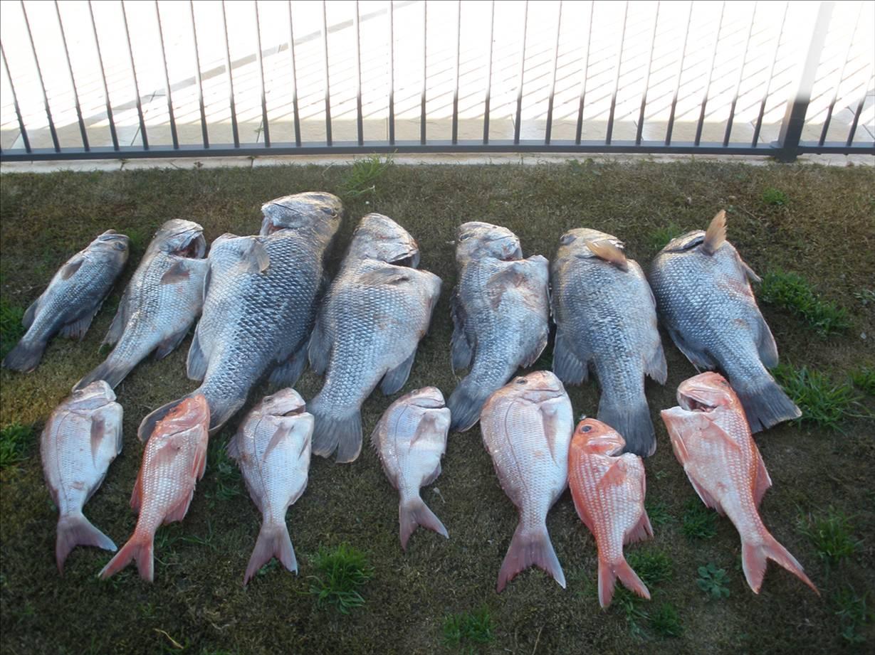Fishing good days fishing photo for Good fishing days