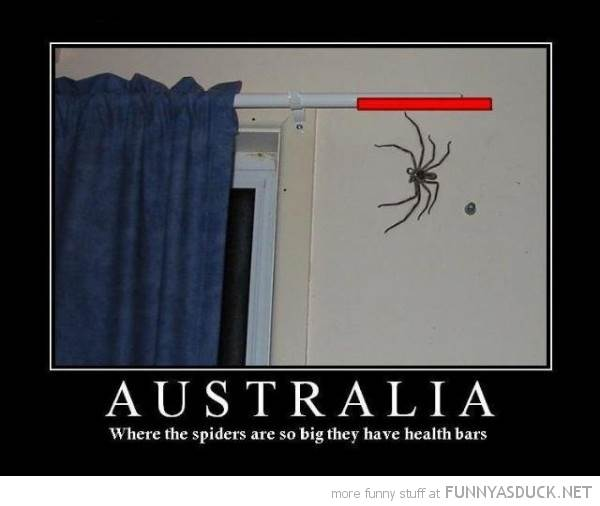 Other funny-huge-spider-australia-health-bar-pics