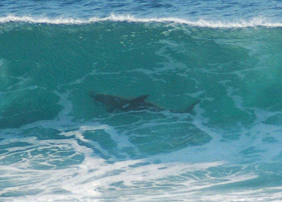 Shark Jokes | Surfing Forums, page 1