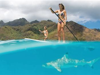 The Best Shark Repellent for Stand Up Paddlers: Free! - Stand Up Paddle News