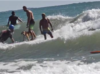 Hugs goes surfing - Stand Up Paddling Dogs in triple overhea - Stand Up Paddle News