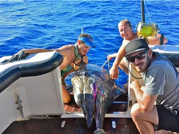 800lb Monster Marlin Caught off Exmouth, WA! - Fishing News