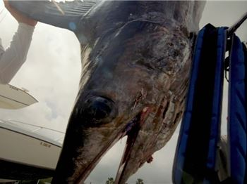 The most dramatic swordfish catch you'll see this week. - Fishing News