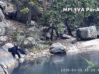 Are these chimpanzee's better at fishing than you? - Fishing News
