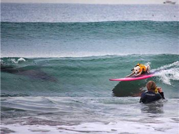 Surfing Dog Stalked By Shark!