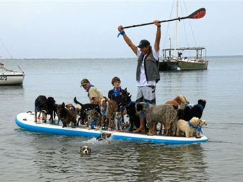 Twenty Five Dogs. One Stand Up Paddle Board! - Stand Up Paddle News