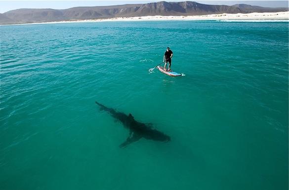 Latest Australian Shark Attack Sends Media Into A Frenzy Seabreeze