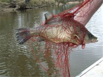 VIC: Public urged to watch for 'killer' fishing nets - Fishing News