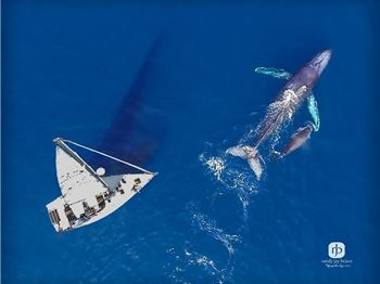 Whale season is here, but don't get sucked in. - Sailing News