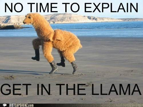 Funny Meme No Caption : Funny captions no time to explain get in the llama photo