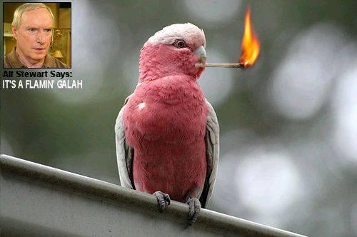 Flaming Galah Tour