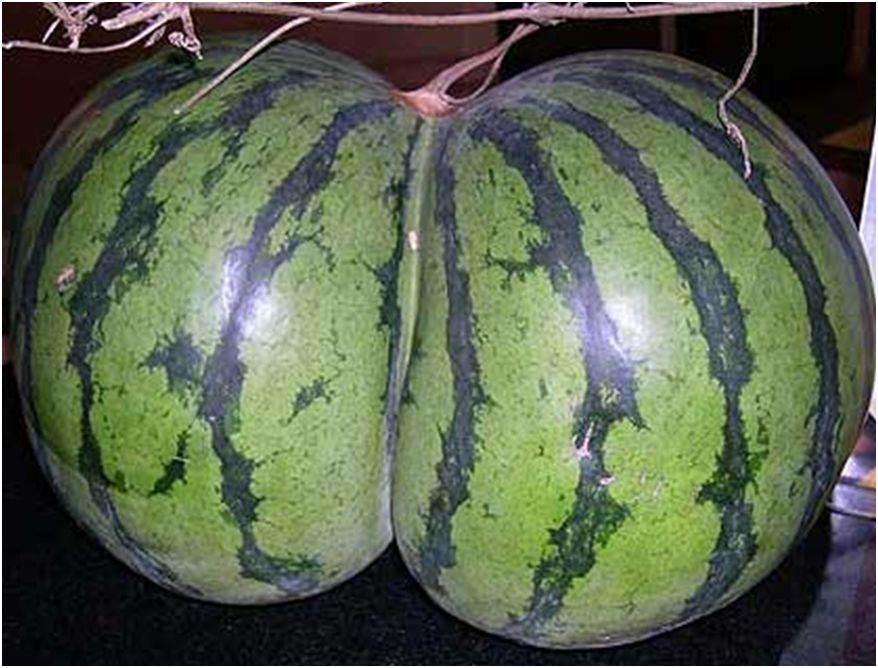 Neobično  voće i povrće  5075463