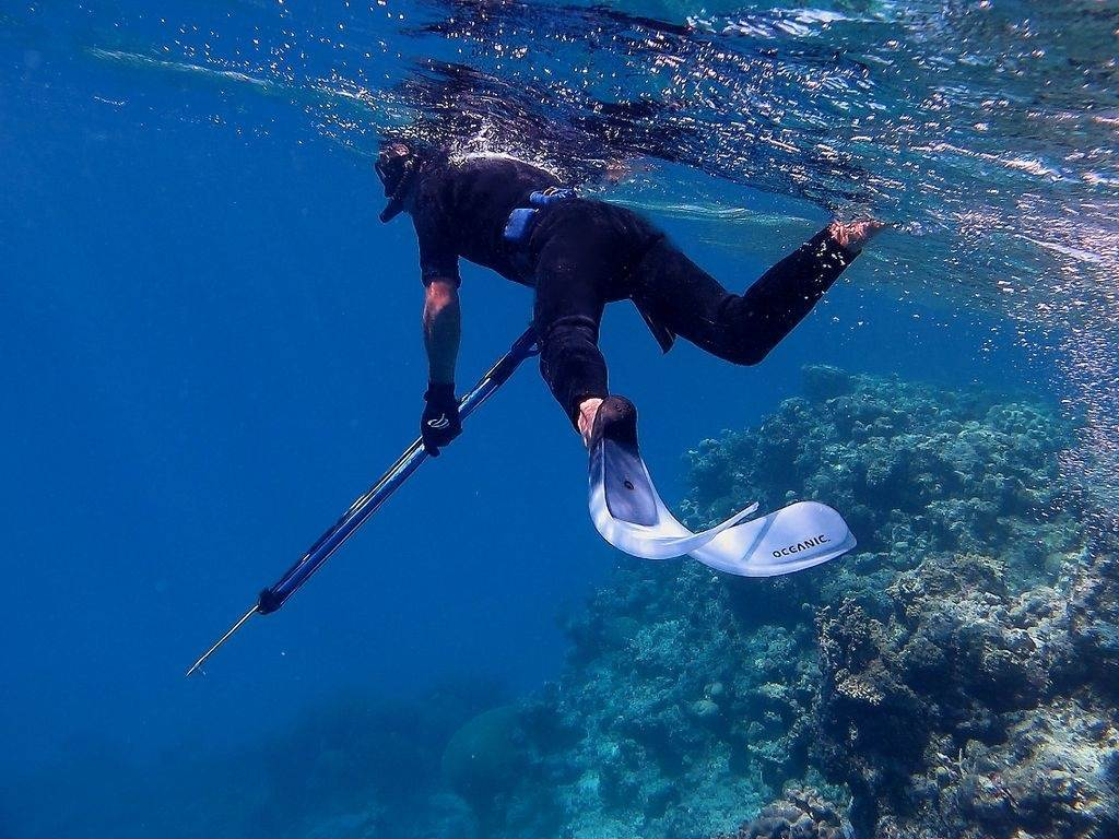Spearfishing | General Discussion Forums, page 1