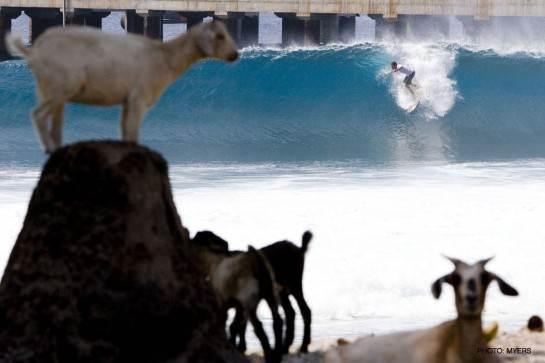photo de surf 8588